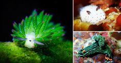 14 pequeñas y coloridas criatur criaturas del mar