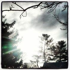 Sunlight through trees.