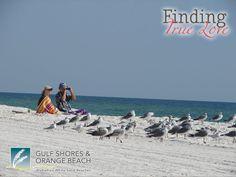 I wonder if we'll see any birds today? @Gulf Shores Orange Beach