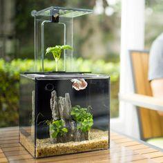 Fancy - EcoQube C Aquarium