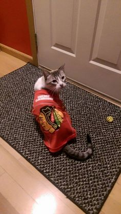 This cat is geared up for the Stanley Cup Playoffs! #Blackhawks
