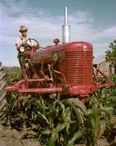 Our Farmall model M was our farm workhorse and did all jobs easily from plowing to prepping the land to planting or mowing the fields to pulling hay wagons to using the power takeoff for shucking the corn and other tasks! Great tractors!