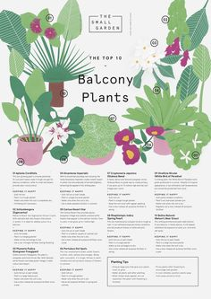 The Small Garden The Top Ten Balcony Plants Downloadable Planting Tips                                                                                                                                                                                 Más