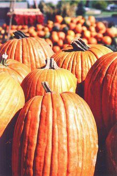 cant have enough pumpkins