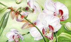 Frog Print featuring the painting The Visitor by Lyse Anthony