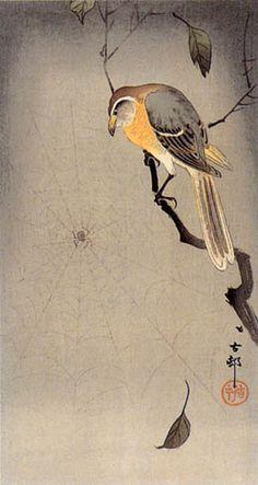 hanga gallery . . . torii gallery: Shrike and Spider by Ohara Koson