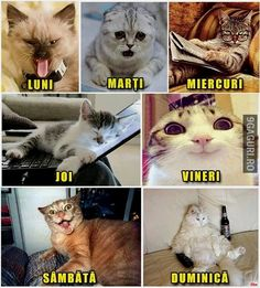 Luni: stau Marti:tip Miercuri: invat Joi: dorm Vineri ies cu prieteni Sambata:petrec Duminica: beau Funny Animal Memes, Funny Animal Pictures, Funny Images, Funny Animals, Cute Animals, Funny Texts, Funny Jokes, Little Free Libraries, Cute Girl Outfits