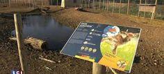 Un zoo placé en liquidation judiciaire : les salariés licenciés et les animaux menacés d'euthanasie