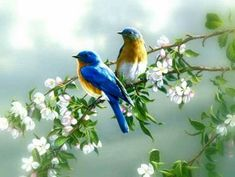 Types Of Cute And Small Birds - What is the smallest bird in the world? Cute and small birds are one of the most interesting creatures on Earth. 1920x1200 Wallpaper, Animal Wallpaper, Hd Wallpaper, Wallpapers, Wallpaper Keren, Flower Wallpaper, Nature Wallpaper, Cute Birds, Small Birds