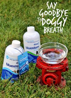 Say Goodbye to Doggy Breath. Here are some tips for your dog's oral care.