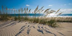 Sea Oats | Our State Magazine