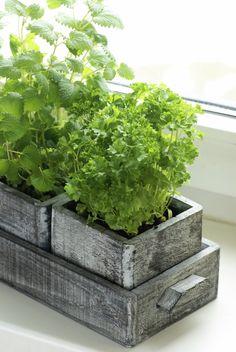 mini herb garden - for year round fresh herbs