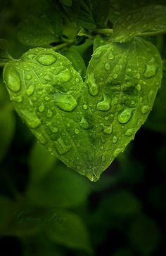 "Heart {Green leaf}: with rain drops, so beautiful! ""D""ebbie. green ~"