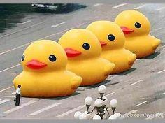 "China proíbe buscas por ""grande pato amarelo"" na web"