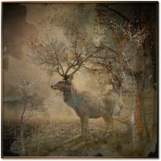 """""""Ehrenthar • In Difesa degli Animali Sempre •"""" by fairy-world on Polyvore"""