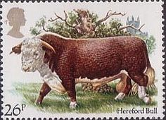 British Cattle 26p Stamp (1984) Hereford Bull