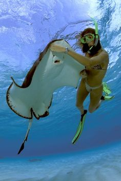 stingray city cayman vi -- I've done this before, really would love to do it again!