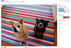 Flickr launches new 'liquid' layout, brings high-resolution images to the main photo pages | The Verge