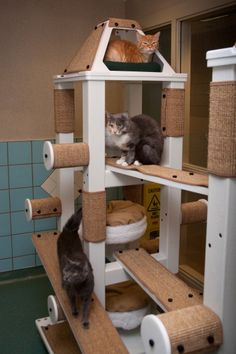Cat posts and towers galore!   At the Cleveland Animal Protective League.... Mancat Mancave Tower of fun.