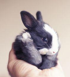 O fotógrafo Ashraful Arefin é apaixonado por coelhos e produziu álbuns de bebê…
