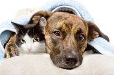 GEWOON DOEN! Steun minima huisdieren. Geen pijn, geen zwerver, geen asiel dier, maar acute medische zorg en herstellen bij de baas in eigen omgeving. Minima huisdieren hebben recht op juiste zorg! Door financiele nood zijn hun baasjes aangewezen op de voedselbank en kunnen tijdelijk onvoldoende voorzien in de basiszorg voor hun dieren. Wij steunen! We hebben nu 11 zieke dieren op de wachtlijst die snel moeten worden geholpen. Maak jij onze crowdfunding mogelijk? www.voorjebuurt.nl