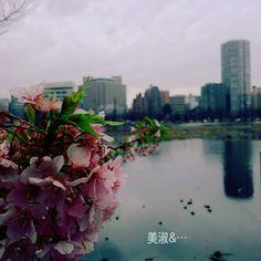 上野公園にて… 우에노 공원에 봄이 살포시 윙크한다.