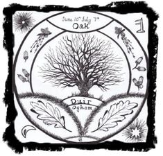Oak  -   Duir Ogham letter D         Ruler of the 7th Lunar Month  10th June - 7th July  Powers:     Protection,   Health,   Inner Strength,  Money,  Healing,  Potency,   Luck.