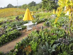 Love the artistically planted edible plants in this garden at Lynmar Estates Winery.  Photo: Kate Frey