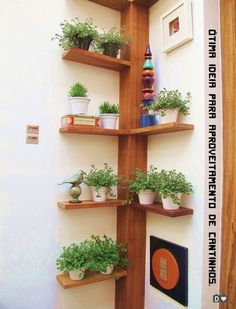 selbstgebautes Eckregal ideen pflanzen vasen baum ähnlich ähnliche Projekte un… homemade corner shelf ideas plant vases tree similar projects and ideas as presented in the picture you can find in our magazine Indoor Garden, Indoor Plants, Balcony Garden, Herb Garden, Verticle Garden, Garden Office, Garden Hose, Decoration Plante, Plant Shelves
