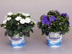 Мобильный декор: цветы в контейнерах - Страница 2 - Форум Дачный ответ Галактики Planter Pots, Plant Pots