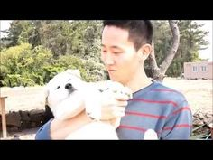 제주도에서 풍산개와 진돗개 - YouTube