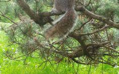 Parco del Valentino : tra scoiattoli e particolarità Particolarità del Parco Valentino di Torino: Un ambiente in stile londinese, pieno di scoiattoli vanitosi, pronti a tutto per ricevere una ghianda e un design caratterizzato dalla presenza di cascate #torino #natura #scoiattoli #parchi