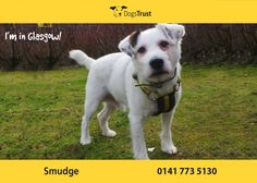 Smudge is a cheeky wee chap from Glasgow who loves to play games especially with toys like squeakys and his favourite is football! Dogs Trust, Glasgow, Games To Play, Smudging, Fur Babies, Labrador Retriever, Adoption, Dads, Felting