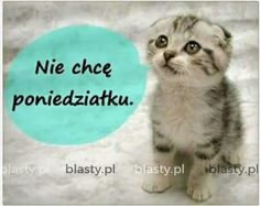 Cute Gif, Animals And Pets, Good Morning, Funny Quotes, Geek Stuff, Photos, Text Posts, Night, Pets