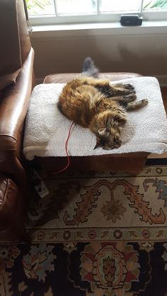 my cat is recharging by the sofa http://ift.tt/2ron7pS