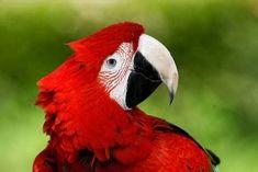 34 Stunning Pictures Of Exotic Birds Rare Birds, Exotic Birds, Most Beautiful Animals, Beautiful Birds, Pink Cockatoo, Exotic Beauties, Pretty Birds, Small Birds, Bird Species
