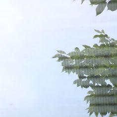 緑 台風一過 台風 夏