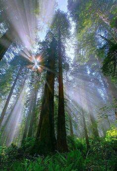 sunbeams in trees