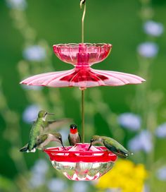Aspects HummBlossom Feeder Set: This hummingbird feeder accessory kit includes everything you need to attract hummingbirds, including our popular HummBlossom feeder, an ant moat, a weather dome and several mounting options with hardware.