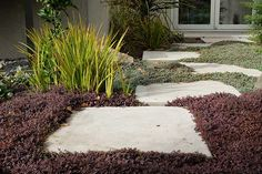 Andy Ellis' tips for growing native New Zealand plants in your backyard - thisNZlife Plant Design, Garden Design, Singapore Garden, Natural Landscaping, Annual Plants, Ornamental Grasses, Travel Design, Flower Show, Native Plants