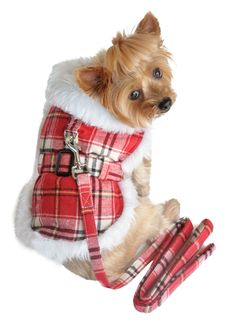 New this Fall...stylish Coat Red Plaid with Leash shop online at www.zoedoggy.com