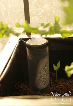 Faire pousser du chou kale dans un potager sur balcon avec Noocity - Mon Petit Balcon Le Chou Kale, Pots, Cabbage, Cooking Kale, Plant Cuttings, Sprouts, Cabbages, Cookware, Brussels Sprouts