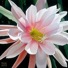 Blushing Beauty,    Brian Davis