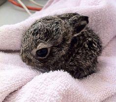 Baby bunny…