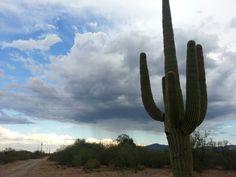saguaro rain