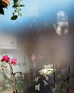"""Jessica Backhaus, Orchids in Salzburg 2006 (from """"What Still Remains"""")"""