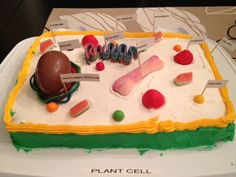 Science Class: Plant Cell Cake  Assignment - Make a 3D model of a Plant cell. Yum!