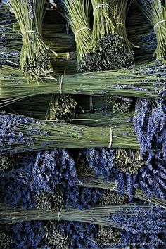 La nature fleure bon les parfums qui se distillent subtilement avec ses arômes qui nous envoûtent ...