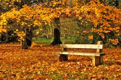 bench in beautiful autumn setting in the Cotswolds in England. Autumn Nature, Autumn Trees, Autumn Leaves, Golden Leaves, Fall Pictures, Fall Photos, Mind Blowing Images, The Good Place, Beautiful Pictures