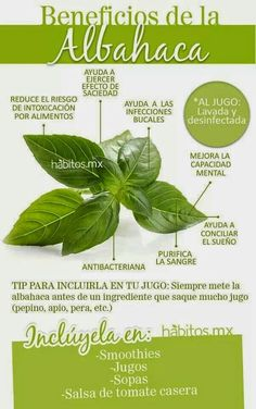 Beneficios de la Albahaca